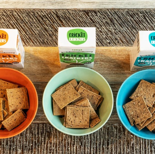 three packs of cricket crackers_made_with_edible insects in three bowls